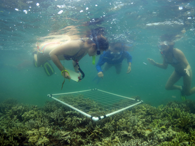 Stanford students surveying coral reef health in Palau