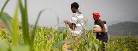 Family in a corn field