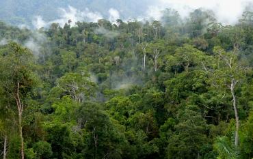 rainforest in Indonesia