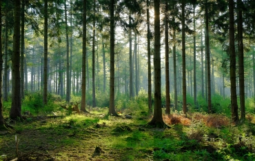 Forest with sunlight in background. Photo Credit: Scott Wylie/Flickr