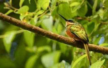 Bird. Image credit: Daniel Karp