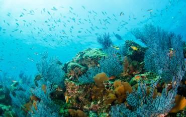 California coral reef