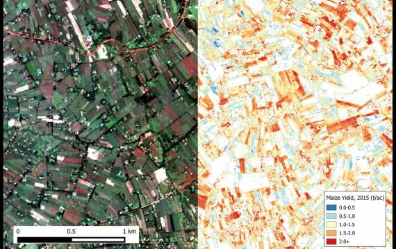 satellite crop yield estimates