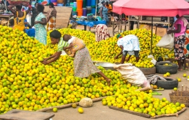 African women collect fruits at market.
