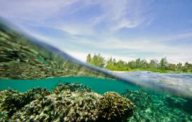 underwater shot of Dennis Islands