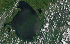 Algal bloom in Lake Okeechobee in summer of 2016