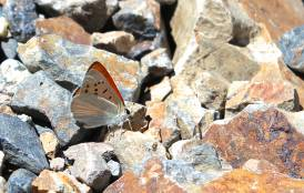 A butterfly resting on a pile of rocks