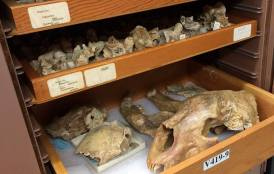 Stanford fossil collection