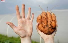 Hand next to an ugly carrot