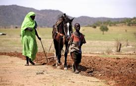 A woman and a boy plow a field using a horse