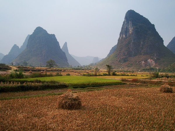 Wheat field in China